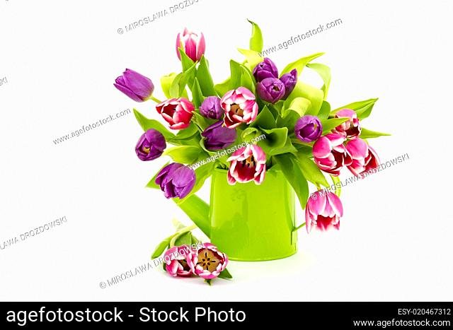 colourful tulips in a watering-can