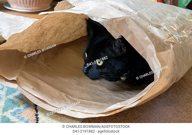 Cat looks out of bag