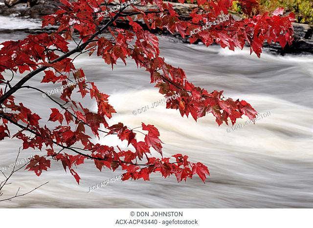 Oxtongue River rapids and autumn foliage, Oxtongue Lake, Ontario, Canada