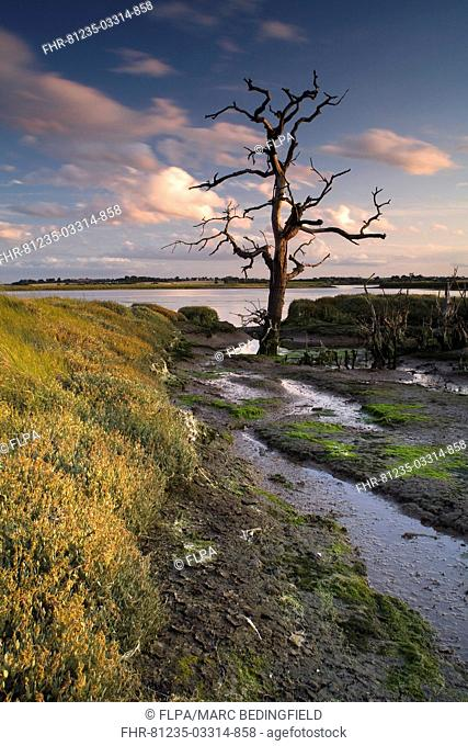 View of wetland habitat at sunset, created to mitigate against loss of Fagbury mudflats as result of expansion of Port of Felixstowe, Trimley Marshes Reserve