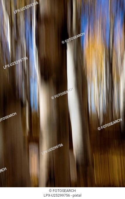 Aspen trees: detail of yellow leaves and dark trunks against blue fall sky, with motion blur, abstract effect, Utah