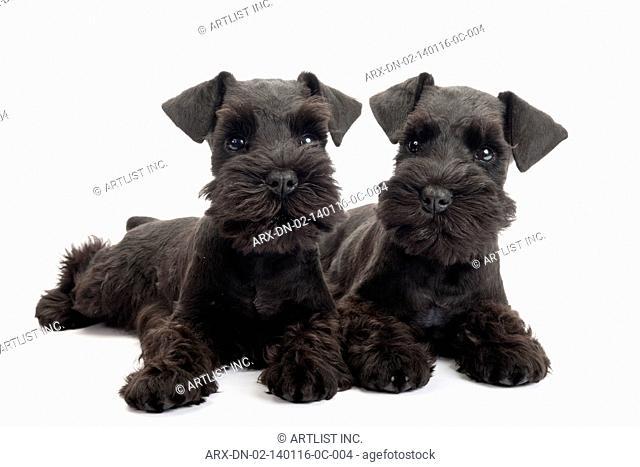 2 puppys
