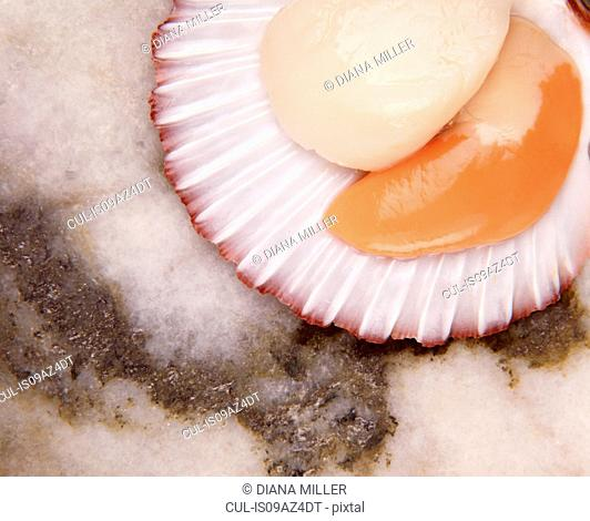 Overhead view of scallops in shell