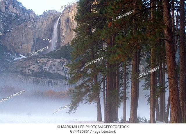 Yosemite Falls and Redwoods in winter Yosemite National Park, California, USA