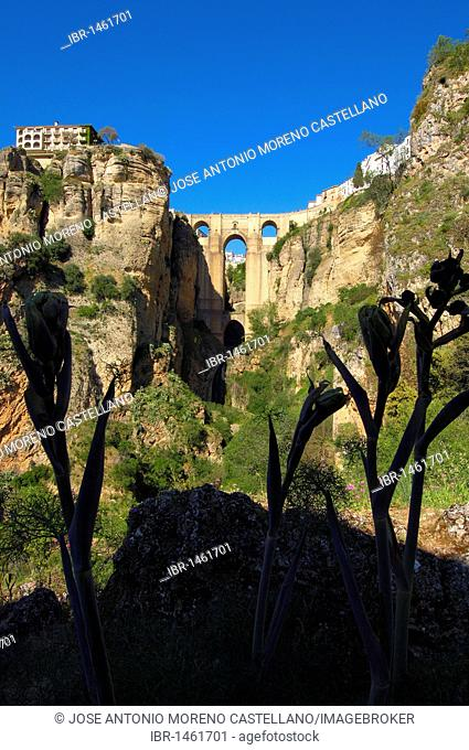 Puente Nuevo, new bridge, spanning the Tajo Gorge, Ronda, Málaga province, Andalusia, Spain, Europe