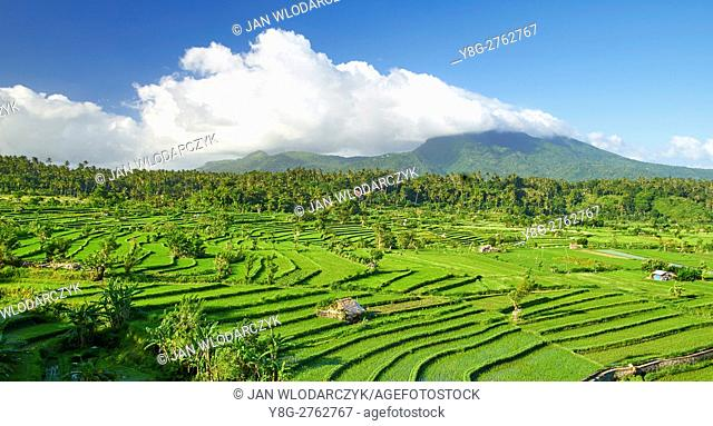 Rice File Terrace, Bali, Indonesia