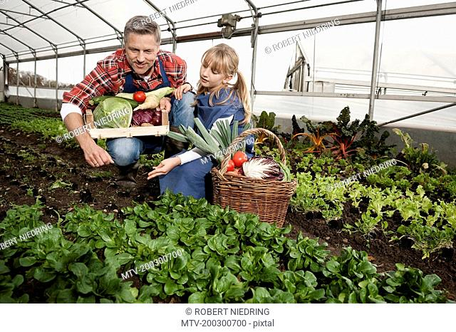 Father and daughter harvesting vegetables in greenhouse