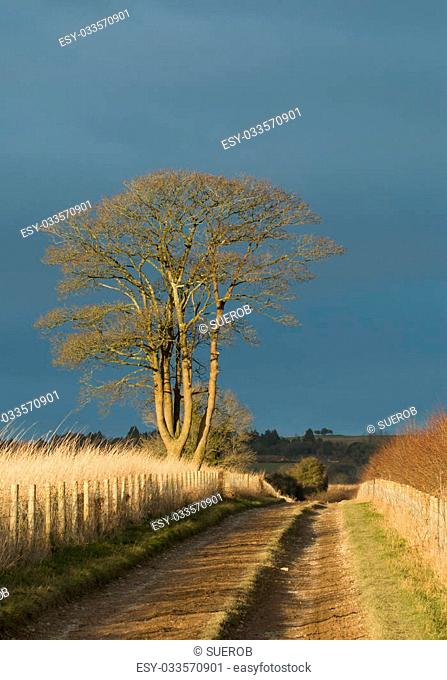 Countryside track with late afternoon sun and heavy cloud behind