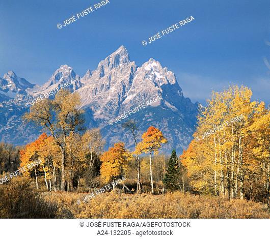 Grand Teton NP. Wyoming. USA