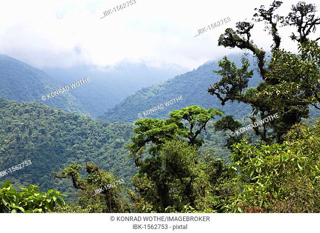 Mountain rainforest, Braulio-Carrillo National Park, Costa Rica, Central America