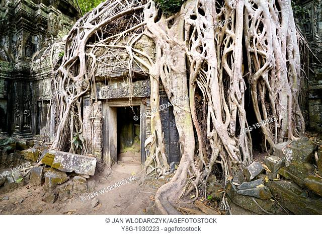 Angkor Temples Complex - roots of a giant tree overgrowing ruins of the Ta Prohm Temple, Angkor, Cambodia, Asia, UNESCO