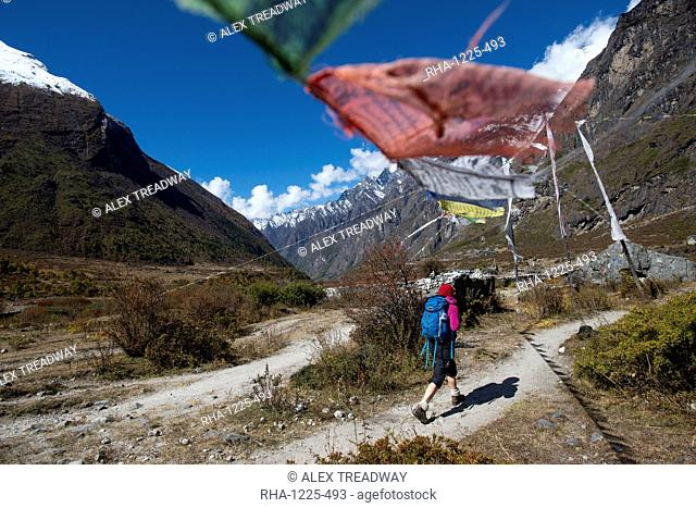 In the Langtang valley a woman treks under a string of prayer flags path between Langtang village and Kyanjin Gompa, Langtang Region, Himalayas, Nepal, Asia