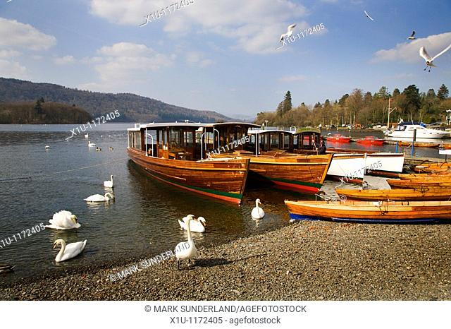 Boats and birds Bowness on Windermere Cumbria England