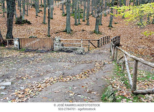 Entrance to Castañar de El Tiemblo (El Tiemblo Chestnut forest). Sierra de Gredos. Avila Province. Castile-Leon. Spain