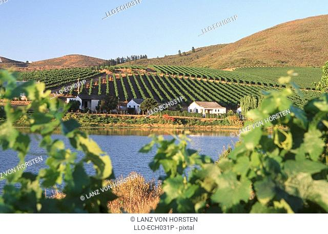 Farm workers houses between a vineyard and dam. Riebeek-Kasteel, Boland District, Western Cape Province, South Africa