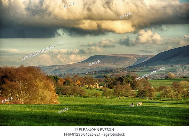 View across farmland towards distant fells, looking towards Pendle Hill, Clitheroe, Forest of Bowland, Lancashire, England, November