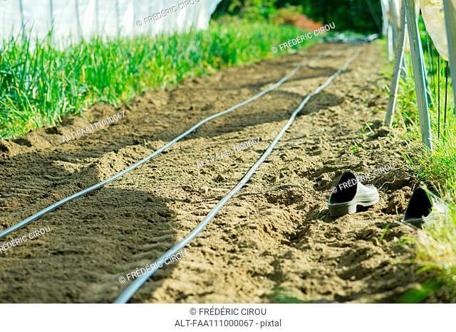 Irrigation hoses in garden