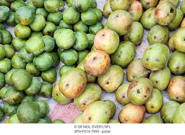 Mangoes in market, Stone Town, Zanzibar, Tanzania