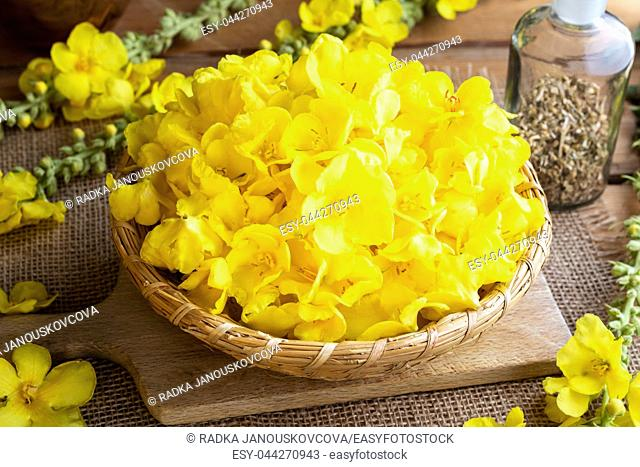 Fresh mullein flowers in a basket on a table