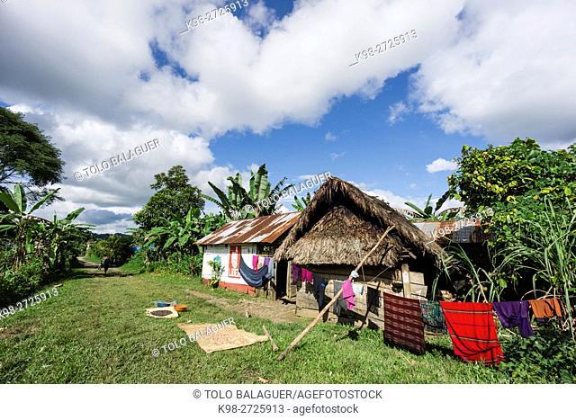frijoles secandose, Lancetillo, La Parroquia, zona Reyna, Quiche, Guatemala, Central America