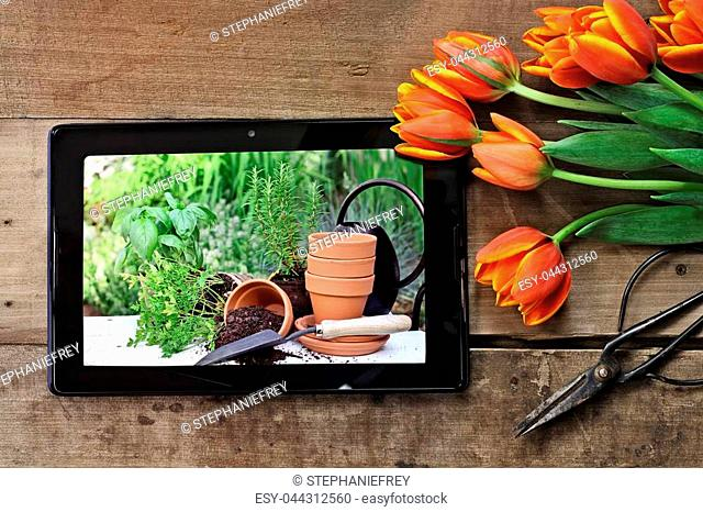 Overhead shot a tablet showing terracotta pots and plants ready to be planted in a garden with a bouquet of orange and yellow tulips over a wood table