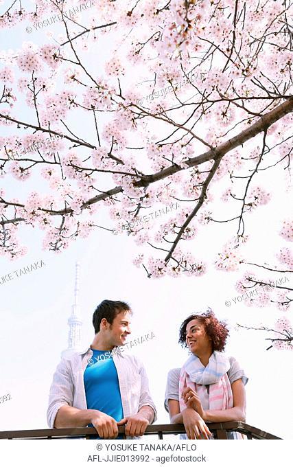 Multi-ethnic tourist couple enjoying cherry blossoms in Japan