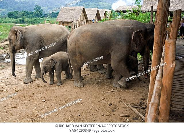 Elephant Nature Park, Mae Taeng, Thailand