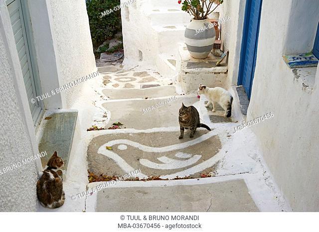 Three cats, Serifos, Greece, Europe