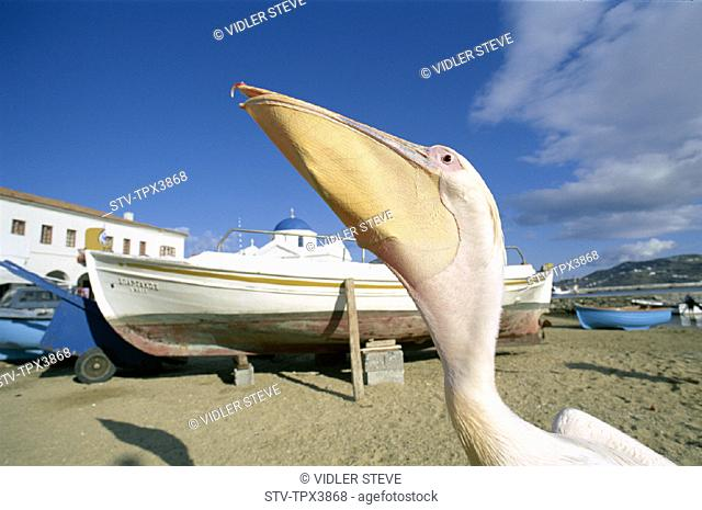 Beach, Boats, Cyclades, Fishing, Greece, Europe, Holiday, Islands, Landmark, Mykonos, Pelican, Tourism, Travel, Vacation
