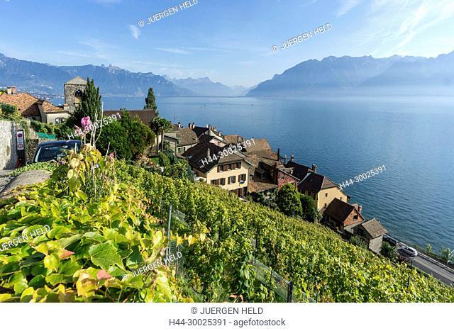 St. Saphorin, Vineyards , Lavaux region, Lake Geneva, Swiss Alps, Switzerland