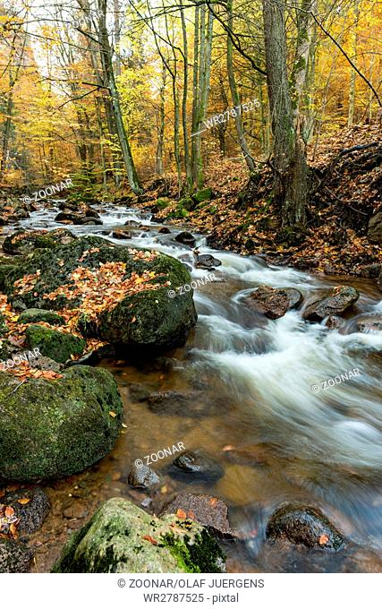 stream in a German wood at fall