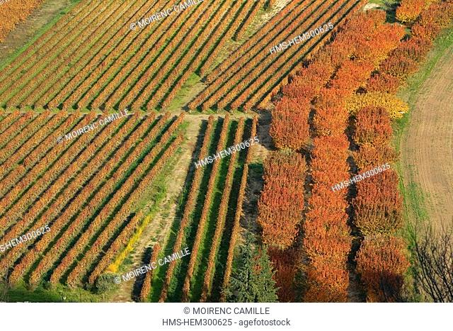France, Vaucluse, Luberon, Menerbes, labelled Les Plus Beaux Villages de France the most beautiful villages of France, sherry trees and vineyard