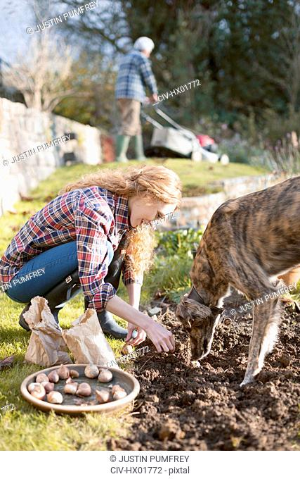 Woman with dog gardening planting bulbs in dirt in autumn garden