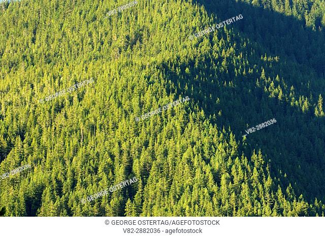 Forest view from summit at Henline Mountain Trail, Opal Creek Wilderness, Willamette National Forest, Oregon