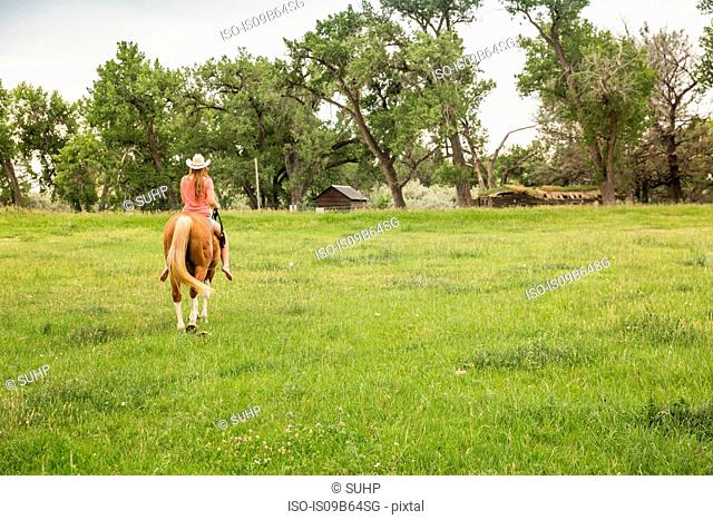 Rear view of young woman riding bareback on horse in ranch field, Bridger, Montana, USA