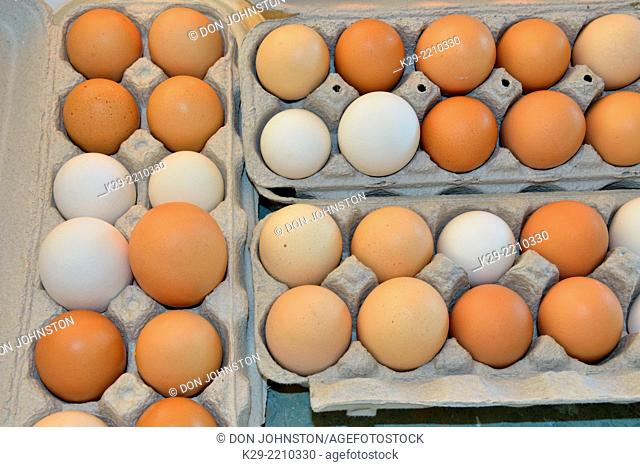 Colour and size variations in locally grown organic eggs, Greater Sudbury (Lively), Ontario, Canada