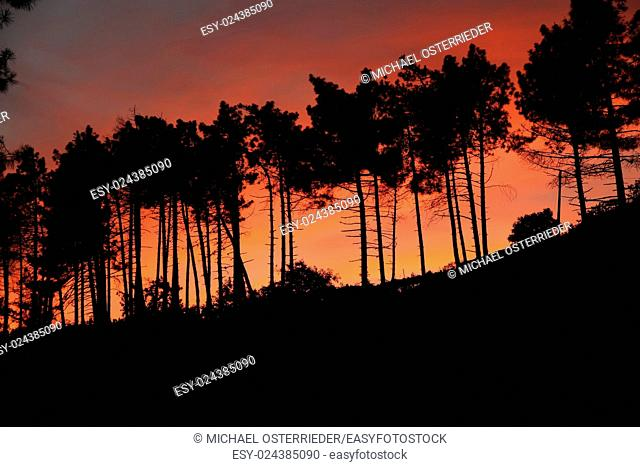 Silhouettes of trees in the sunset. Photo taken in Cinque terre, Italy