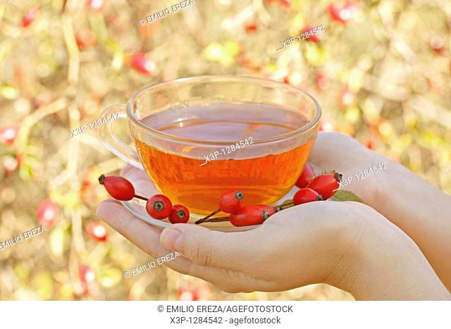 Rose hips infusion