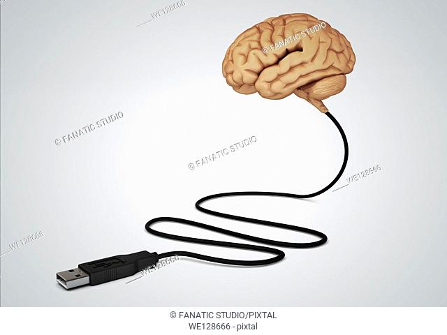 Illustration of human brain connected with USB cable over gray background