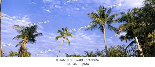 Palm Trees FL