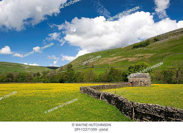 Traditional meadows in swaledale in early summer, covered in buttercups and wildflowers; Muker, North Yorkshire, England