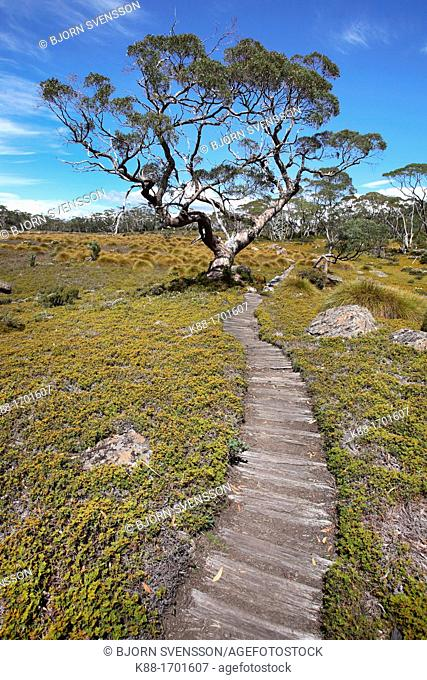 The Overland Track  Cradle Mt - Lake St Clair National Park, Tasmania, Australia