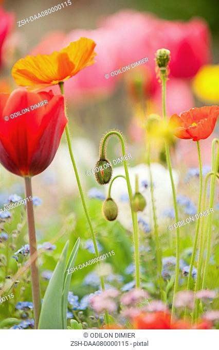 Wildflowers blooming