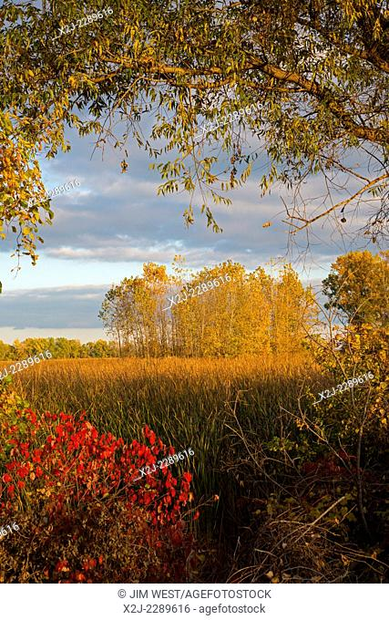 Monroe, Michigan - Fall colors at Sterling State Park