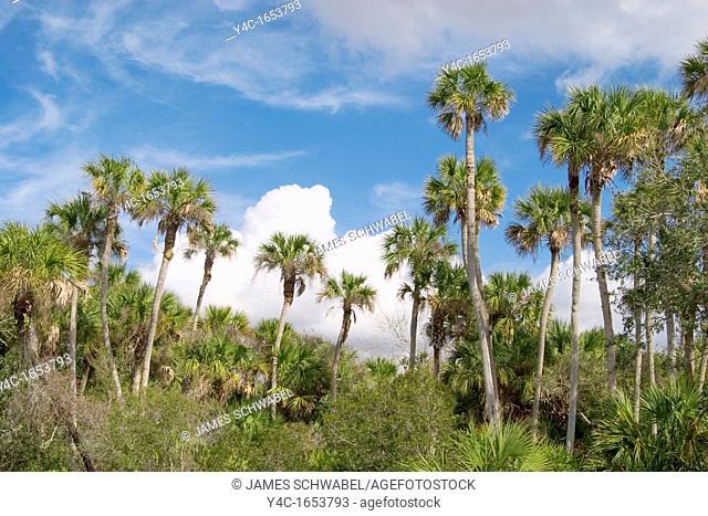 Along the Myakka River in southwest Florida