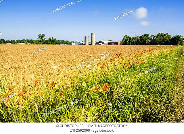 Wheat and Barley fields in America