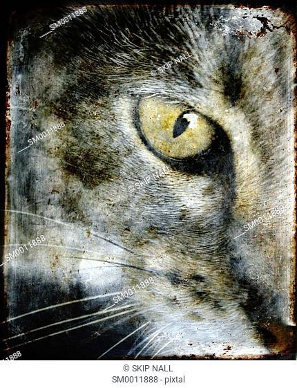 Closeup on a cat's eye