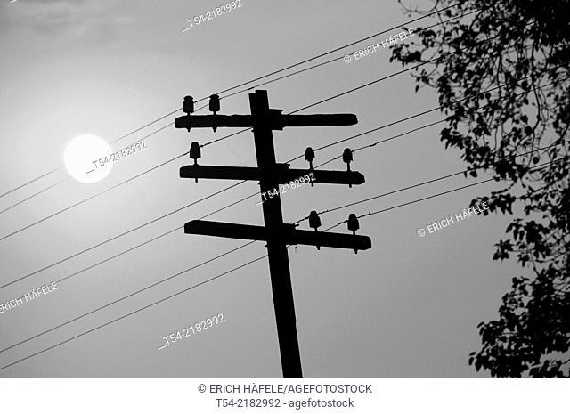 Old telegraph pole of the Death Railway in Kanchanaburi