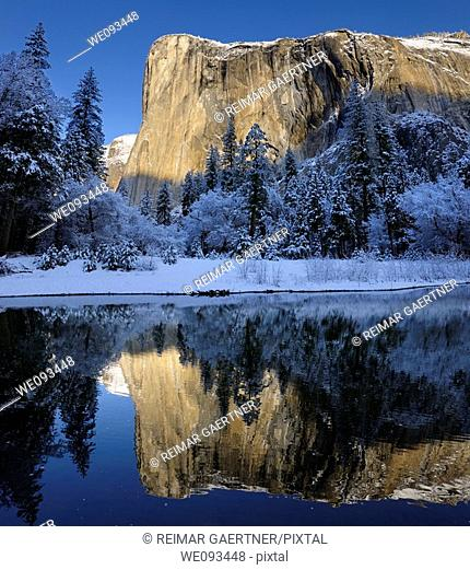 Morning light on El Capitan in winter reflected in the Merced River with snow covered trees in Yosemite Valley
