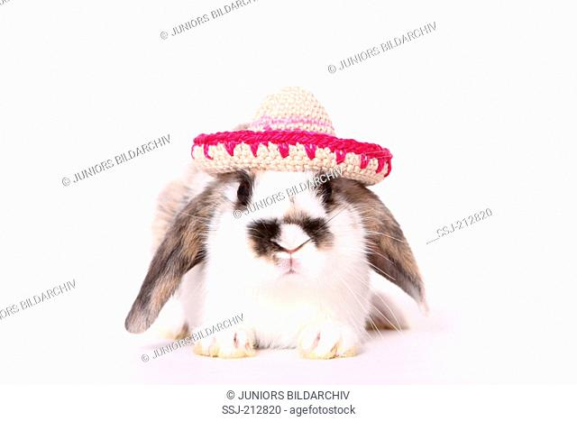 Lop-eared dwarf rabbit wearing a crocheted sombrero. Studio picture against a white background